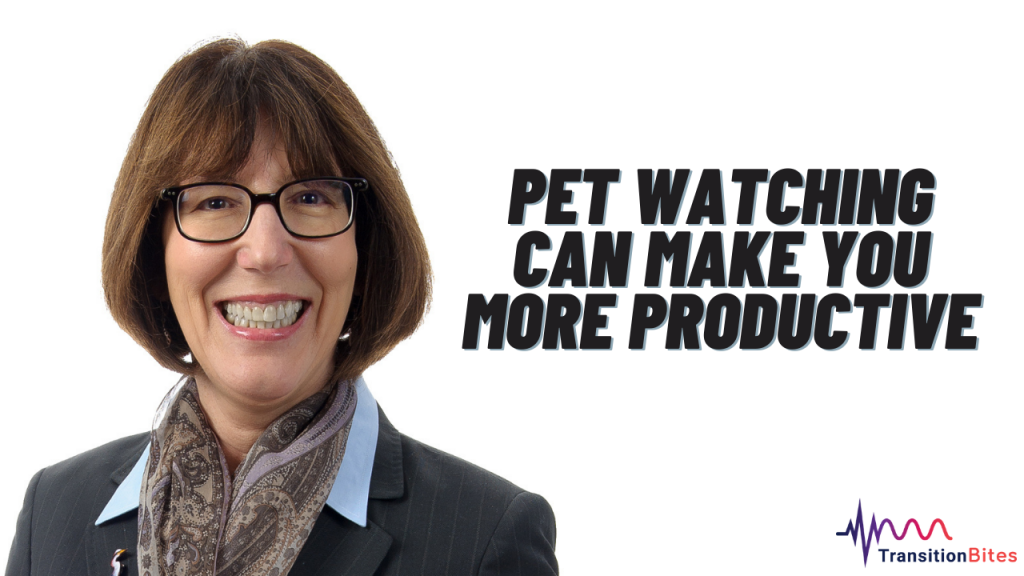 Pet Watching Can Make You More Productive